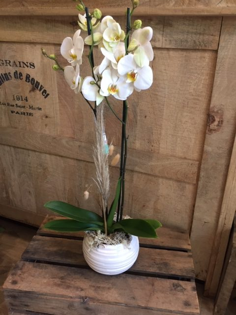 orchidee 2 branches 39.90€